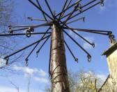 Exposition Arborescences