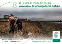 LA LORRAINE AU RYTHME DES OISEAUX DECOUVRIR LA PHOTOGRAPHIE NATURE