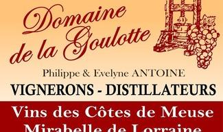 AUTOMNE A LA FERME DECOUVERTE DE LA VITICULTURE - Saint-Maurice-sous-les-Côtes