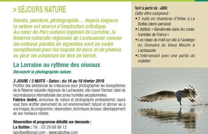 LA LORRAINE AU RYTHME DES OISEAUX DECOUVRIR LA PHOTOGRAPHIE NATURE 2 - Vigneulles-lès-Hattonchâtel